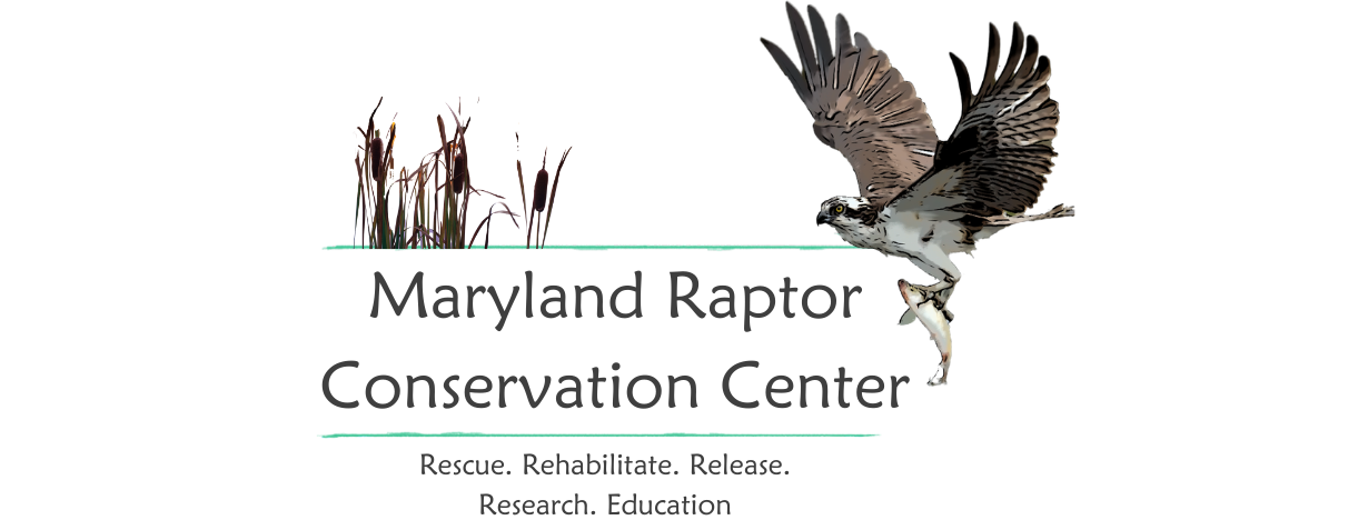 Maryland Raptor Conservation Center. Rescue. Rehabilitate. Release. Research. Educate.